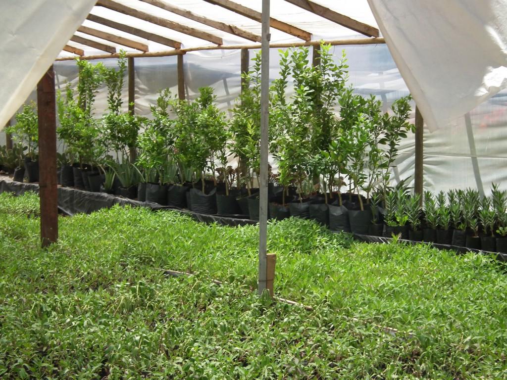 Jardin prat vivero de arbustos rboles palmeras y otros for Jardines con arboles y arbustos
